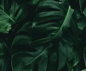leaves, green, and wallpaper image
