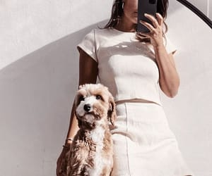 accessories, chic, and dog image