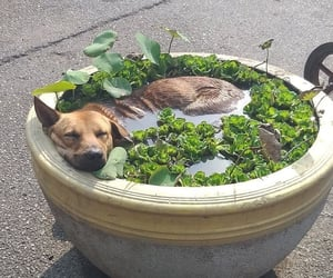 dog, animal, and aesthetic image