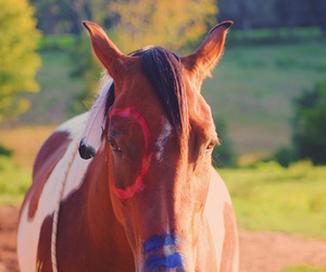 horse and indian horse image