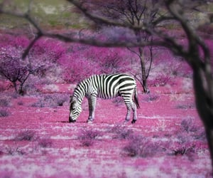 zebra, bloom, and freedom image