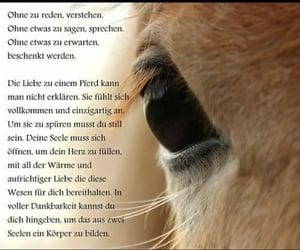 animal, deutsch, and pferd image