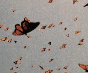 wallpaper, aesthetic, and butterfly image
