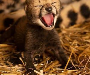 too too cute and newborn cheetah image