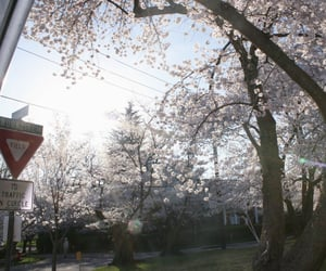 aesthetic, japan, and scenery image