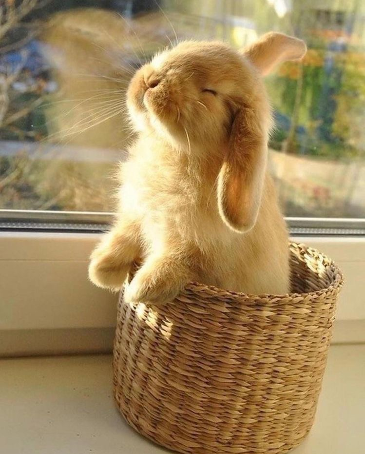 bunnies, cute, and adorable image