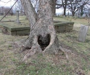 aesthetic, heart, and tree image