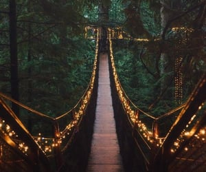 forest, green, and pnw image