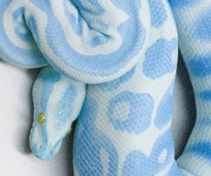 blue and snake image