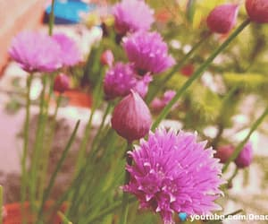 flowers, gif, and pink image