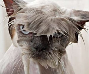 funny animals and funny cats image
