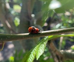 bug, cuddle, and ladybugs image
