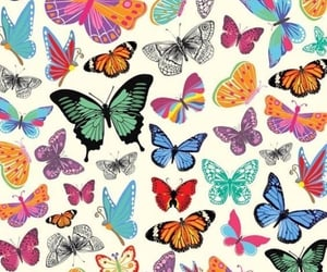 quotes, butterfly, and aesthetic image