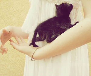 black and white and kitten image