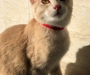 cat, gatinho, and Gatos image