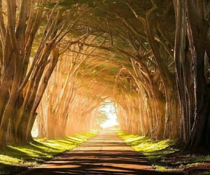 beautiful, road, and forest image