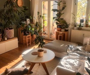 home, plants, and cat image