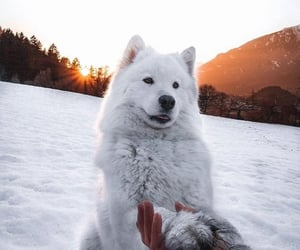 snow, cute, and aesthetic image