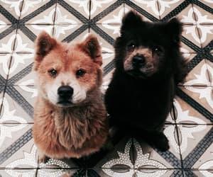 animal, pet, and dog image