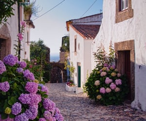 flowers, street, and house image