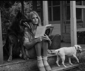 black, black & white, and dog image