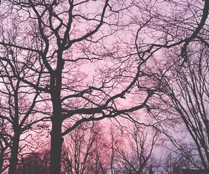 nature, pink, and aesthetic image