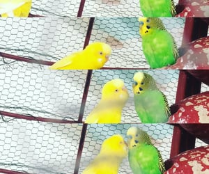 amour, bird, and couple image