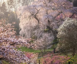 beauty, flowering tree, and flowers image