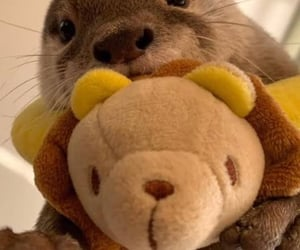 icons, otter, and otters image