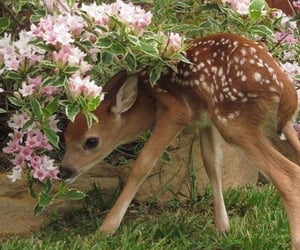 aesthetic and deer image