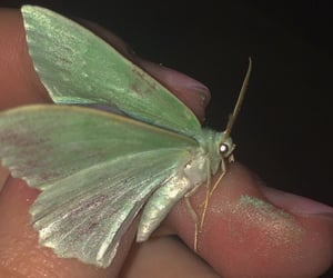fairy, light green, and aesthetically image