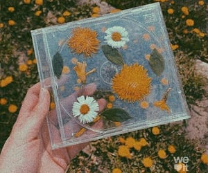 flowers, aesthetic, and cd image