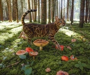 cat, forest, and mushroom image