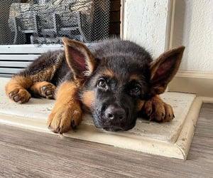 animals, dog, and inspiration image