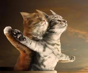 cat, titanic, and funny image