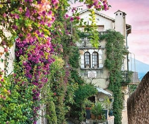 flowers, france, and French Riviera image