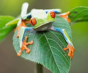 Animales, frog, and rana image