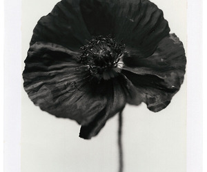 black and flower image