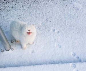 cat, kitty, and snow image