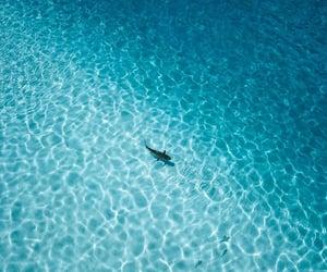 Aloha, sea, and travel image