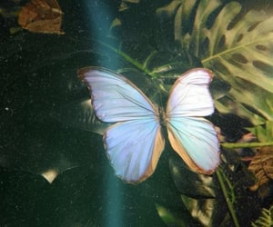 butterfly, nature, and animal image