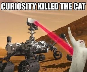 funny, cat, and curiosity image
