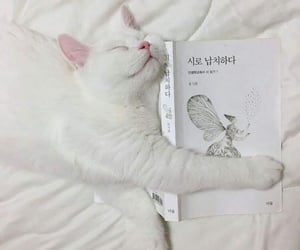 white, aesthetic, and cat image
