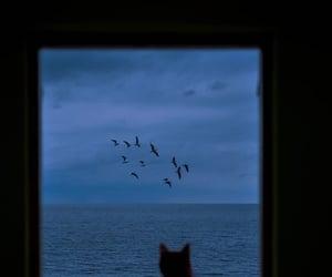 aesthetics, calm, and cat image