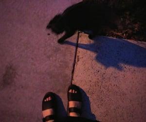 cat, losangeles, and magic image