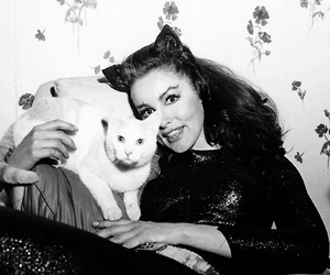 cat, catwoman, and 60s image