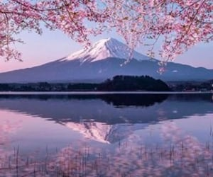 beautiful, flowers, and mount fuji image