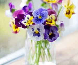flowers, beautiful, and pansy image