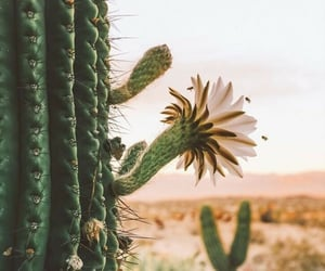 cactus, flowers, and wallpaper image