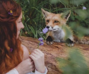 animals, fox, and girl image